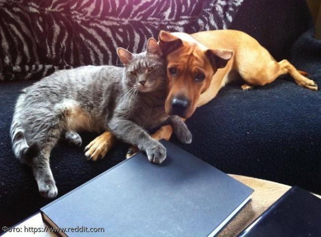 15 котов, которые по уши влюбились в собак