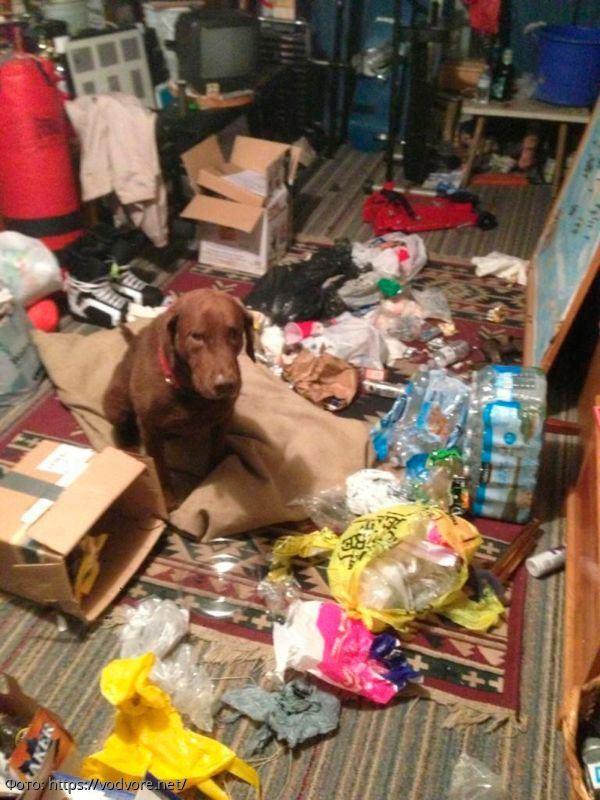 10 ситуаций, с которыми сталкиваются владельцы собак каждый день