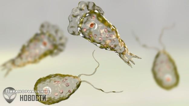 Плотоядная амёба за 10 дней съела мозг американца | Болезни и мутации | Паранормальные новости