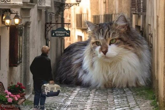 Ученые медицинского университета имени Сеченова обнаружили, что владельцы кошек склонны к шизофрении