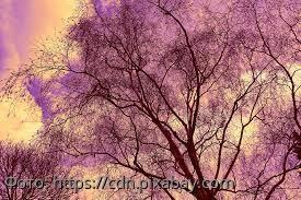 Выберите дерево и узнайте о том, что поможет сделать вашу жизнь счастливой