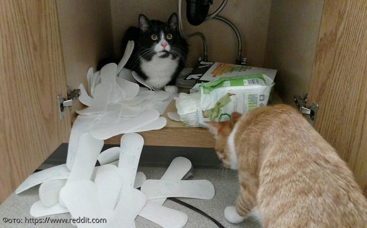 10 фото котов, которые не боятся гнева хозяев