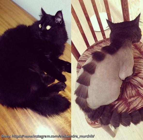 10 фото смешных котов, которые остались недовольны новой стрижкой