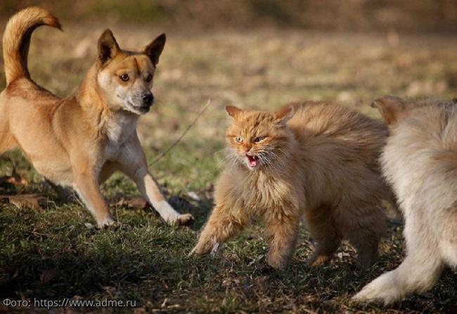 10 фото суровых дворовых котов, для которых каждый день - борьба