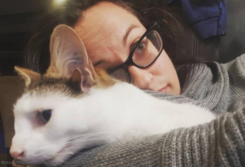 Кот с четырьмя ушами прославился в соцсетях