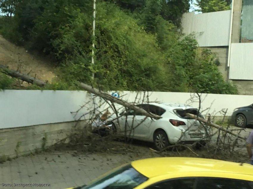 В Кисловодске дерево упало на крышу автомобиля
