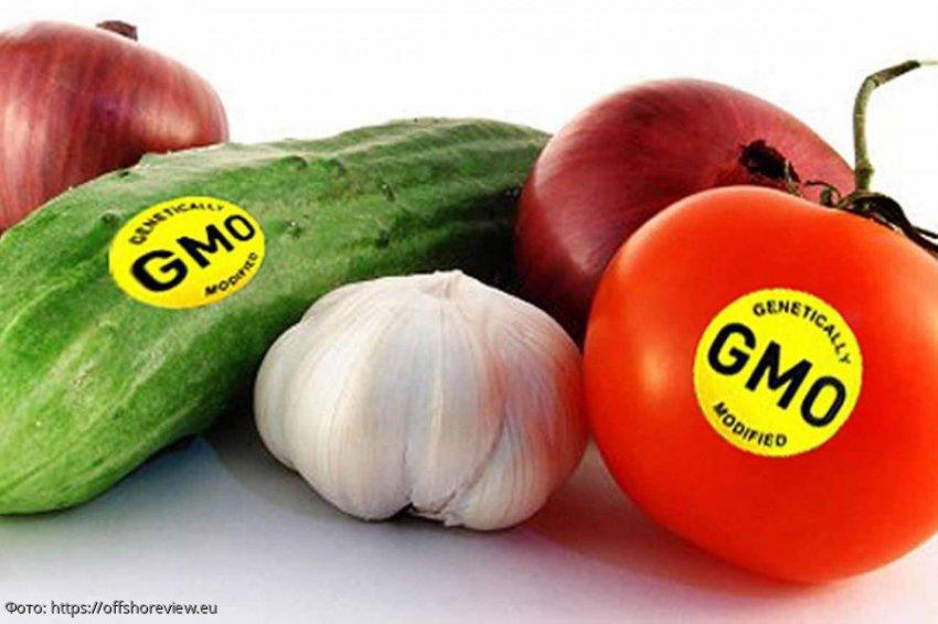Все, что нужно знать о ГМО и ГМ-продуктах