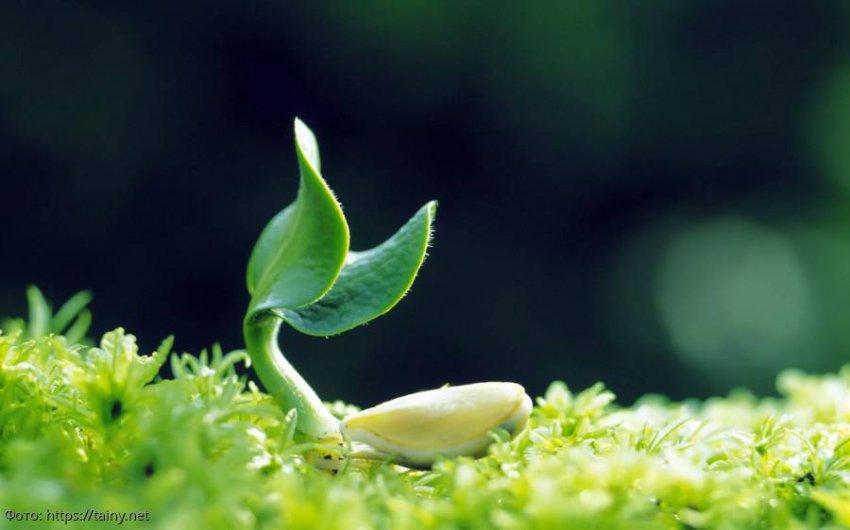 Ученые Гарвардского университета доказали, что у растений нет чувств