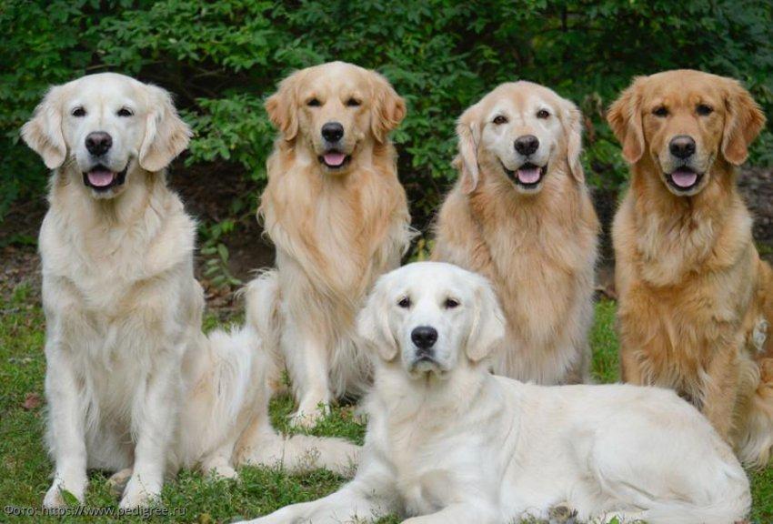 Самые добрые и миролюбивые породы собак