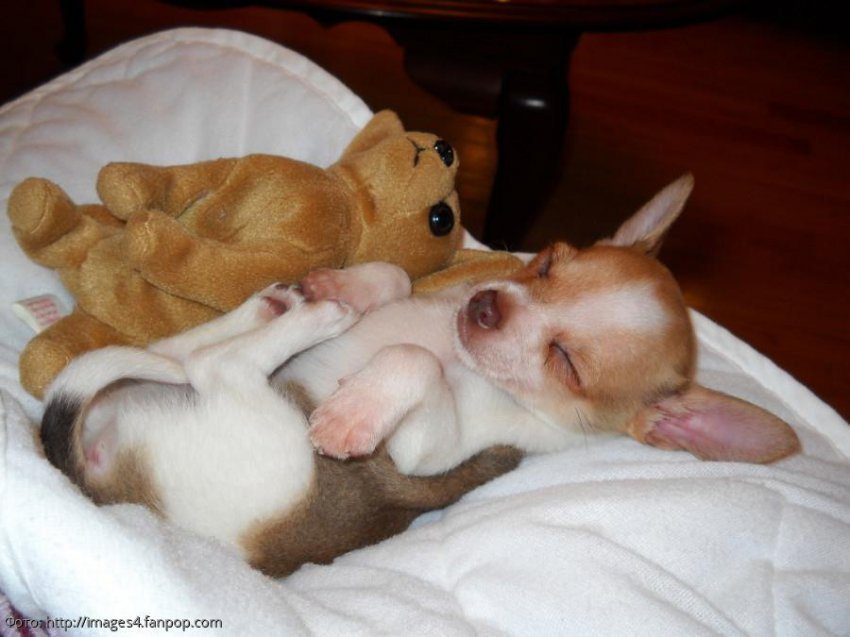 10 фотографий собак, которые выбрали самые невероятные позы для сна