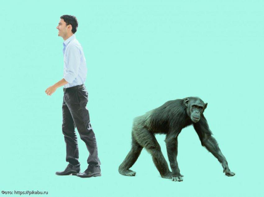 Ученые из США установили, почему не все приматы превратились в людей