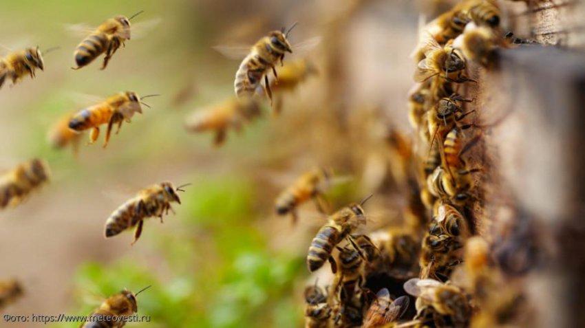 Предсказание Ванги о массовой гибели пчёл начинает сбываться