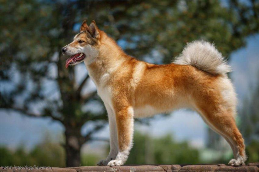 Названы самые недорогие породы собак