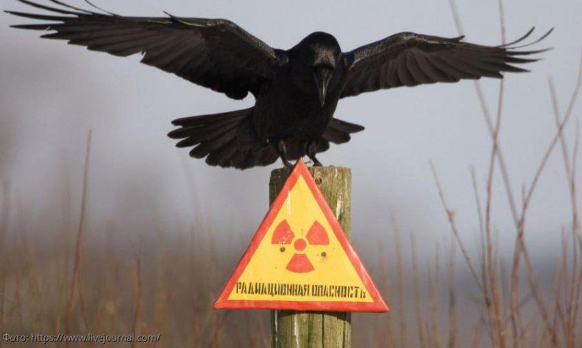 Радиоактивный могильник на юго-востоке Москвы мэрия не считает опасным объектом