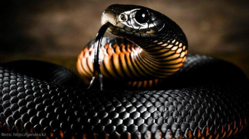 Топ-5 самых агрессивных животных планеты