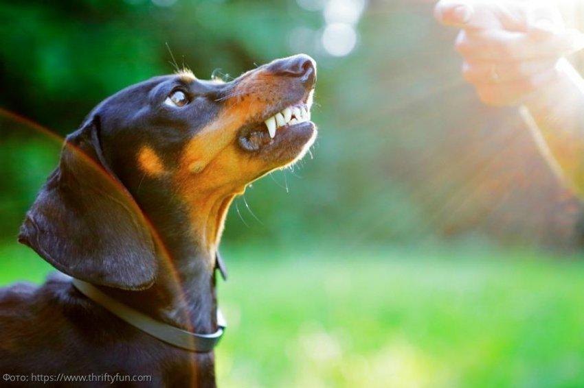 5 самых агрессивных пород собак