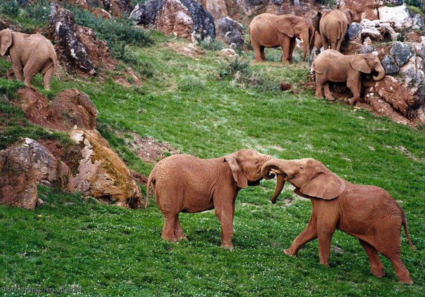 Топ 5 лучших зоопарков планеты