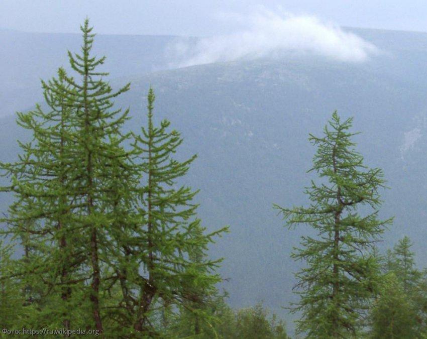 Предсказана экологическая катастрофа в Сибири