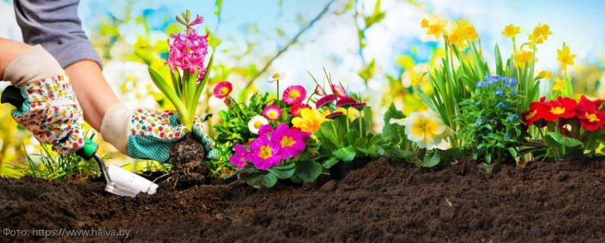 Лунный календарь садовода-огородника с 17 по 21 июля