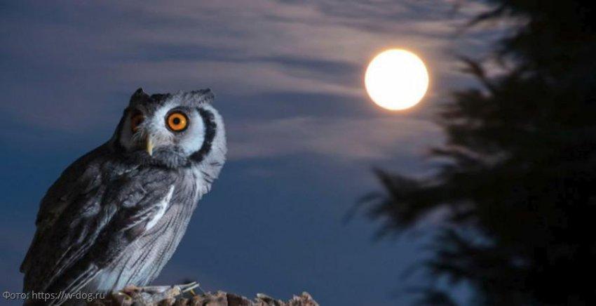 Особенности влияния Луны на животных и растения