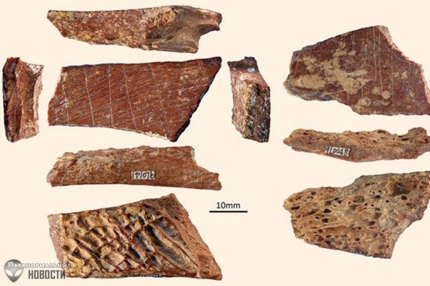 Загадка костей животных, на которых 115 тысяч лет назад кто-то оставил красивую гравировку из линий | Древний человек | Паранормальные новости
