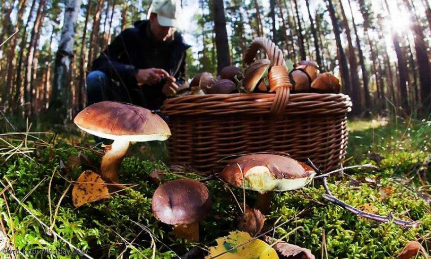 Роскачество озвучило основные рекомендации по сбору грибов
