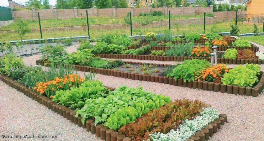 Лунный календарь садовода-огородника с 29 июля по 4 августа