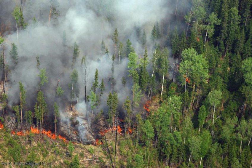 Юрий Лоза призвал перестать тушить пожары в Сибири