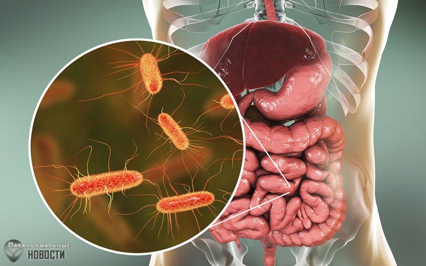 10 бактерий, которые могут заживо съесть человека | Болезни и мутации | Паранормальные новости