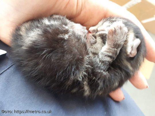 Новорожденный котенок упал прямо с неба перед женщиной, которая вышла на пробежку