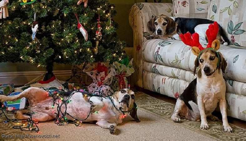 Фотографии собак, которые неплохо пошалили в отсутствие хозяев