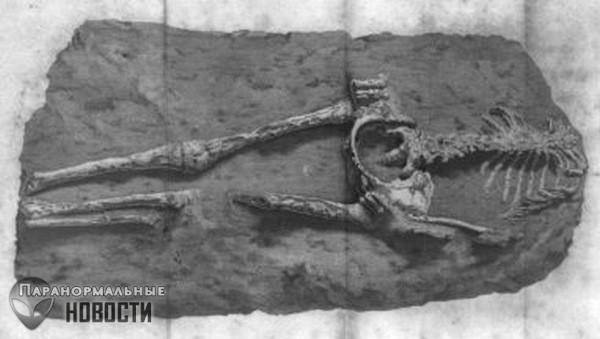 Женщина из Гваделупы: Неуместный артефакт возрастом в 28 миллионов лет | Тайны истории | Паранормальные новости