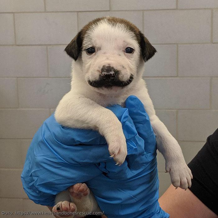 В Сети набирает популярность бездомный щенок с усами, как у Сальвадора Дали