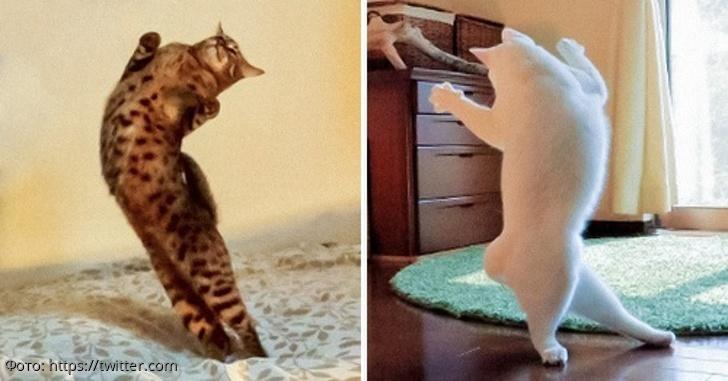 10 котов, на которых нашло легкое безумие