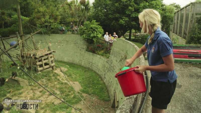 Страшное происшествие в британском зоопарке | Тайны истории | Паранормальные новости