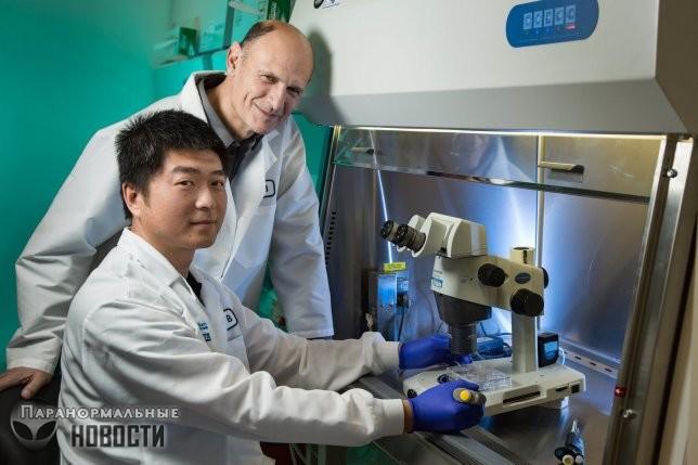 Испанские ученые создали первый в мире гибрид человека и обезьяны | Чудеса науки | Паранормальные новости