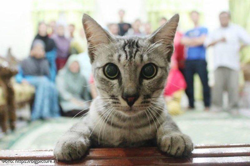 10 фотографий, которые стали незабываемыми только благодаря котикам