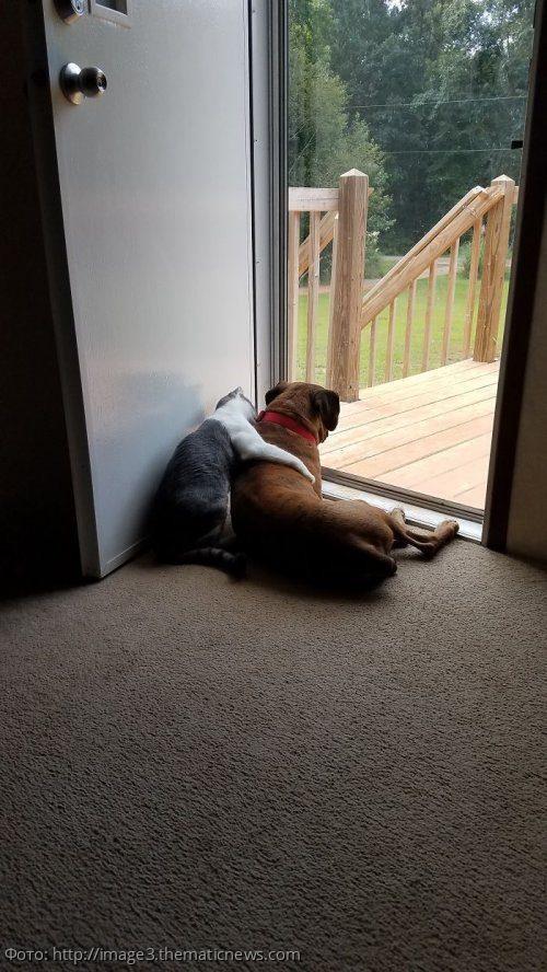 10 трогательных фотографий, подтверждающих дружбу собак и кошек