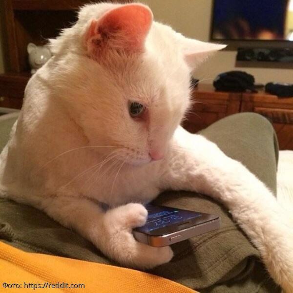 10 котов, в существование которых сложно поверить