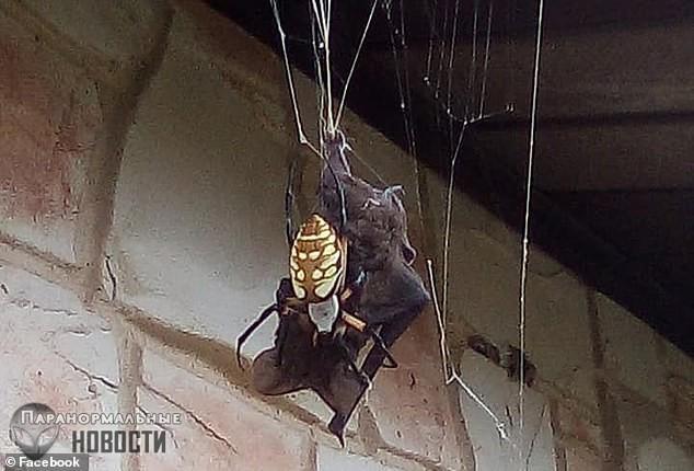Посторонись, Австралия! В Техасе паук поймал и съел летучую мышь | Загадки планеты Земля | Паранормальные новости
