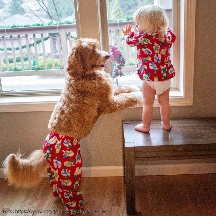 Хвостатый нянь: история дружбы собаки и ребёнка, покорившая Сеть