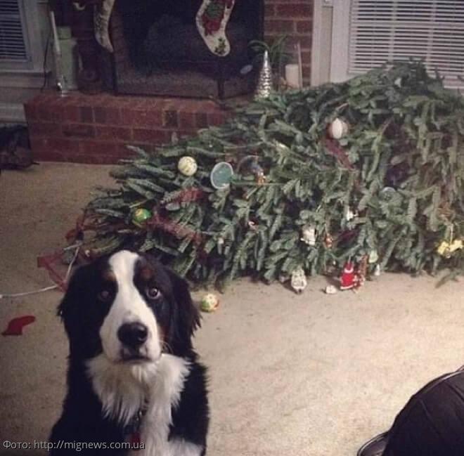 10 забавных фотографий провинившихся собак, которым очень стыдно