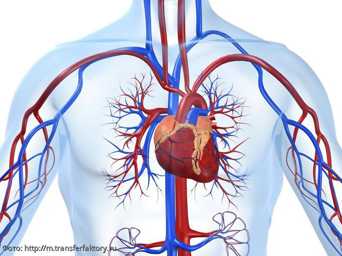 Российские ученые разработали новый способ обнаружения заболеваний сердца