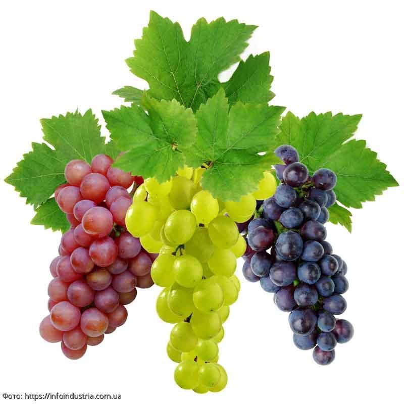Полезные свойства винограда, о которых мало кто знает