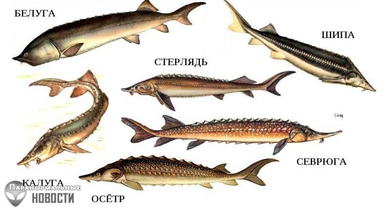 На видео засняли жуткую черную «рыбу из Ада» | Любопытное видео | Паранормальные новости