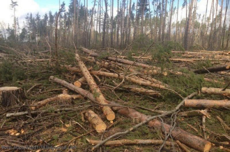 Минприроды допустило полный запрет на экспорт леса в Китай