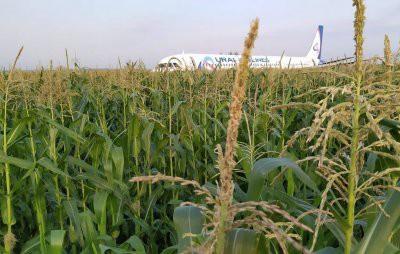 Дамир Юсупов посадил самолет Airbus A321 «Уральских авиалиний» в кукурузном поле (видео)