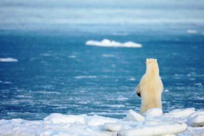 В Арктике впервые зафиксировали 35 градусов жары