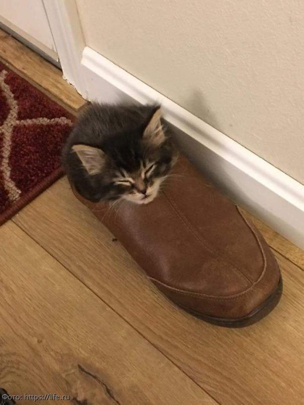 10 фотографий спящих котов, которые демонстрируют чудеса гибкости и смекалки
