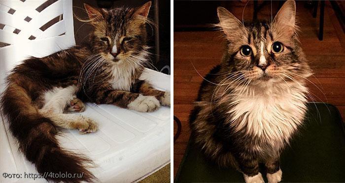 Твори добро: фото кошек до и после того, как их подобрали с улицы